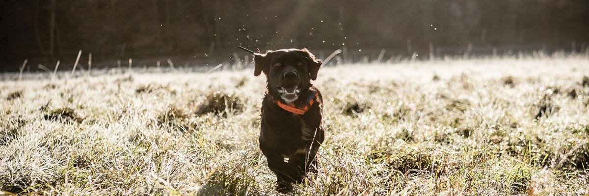 signoff_dog_training_collar
